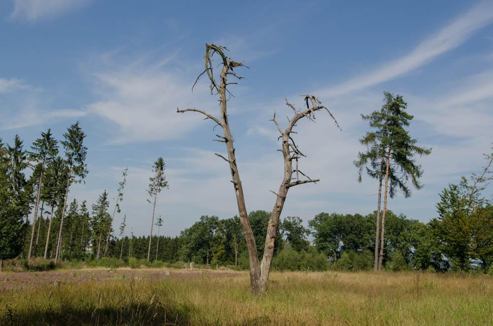 Helfer gesucht! Arbeitsaktion im Buchholzer Moor, 8. Juli
