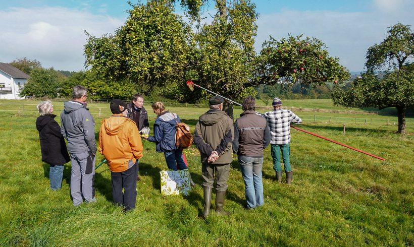 Viele alte Obstsorten im Asbacher Land