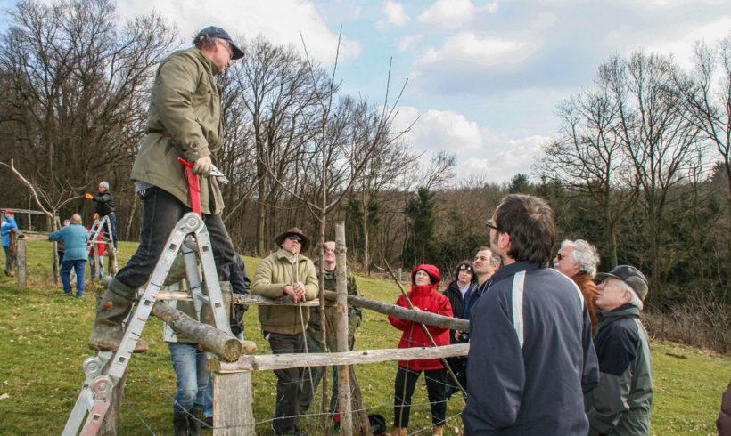 Baumschneidelehrgang mit Harry Sigg für Anfänger und Unsichere