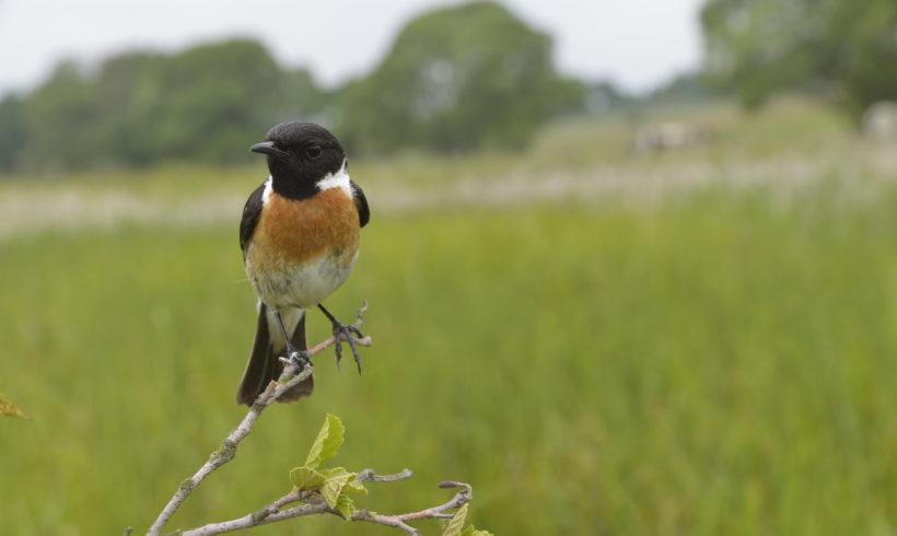 Die einheimische Vogelwelt kennen lernen – ornithologische Wanderung am 29.4.2018