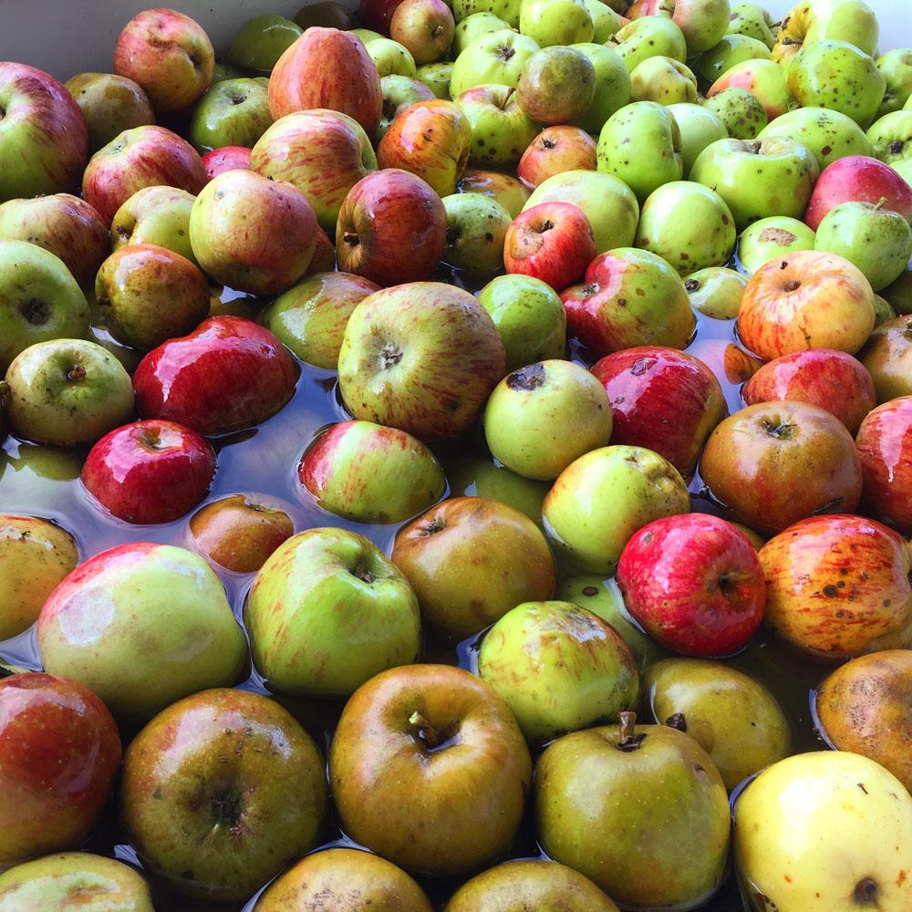 Eine bunte Apfelmischung