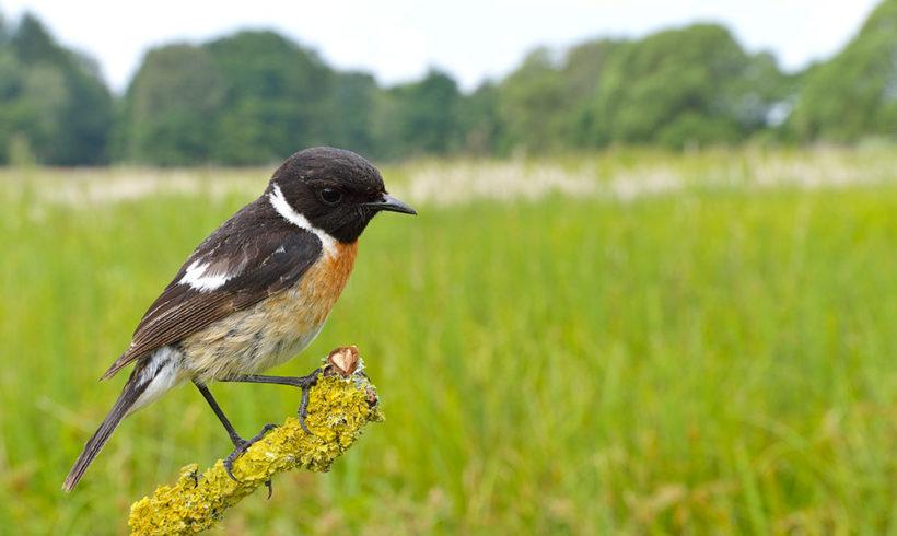 Am 7.05.2017 unsere einheimische Vogelwelt kennen lernen