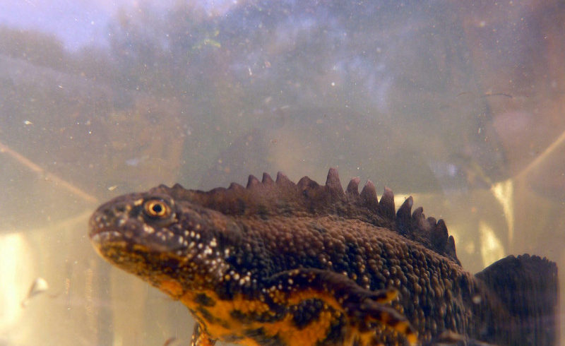 SGD Nord: Amphibienprojekt sichert wertvolle Lebensräume
