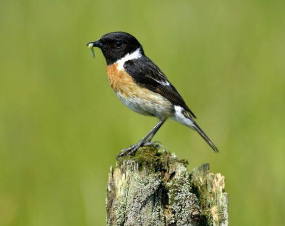 Ornithologische Wanderung am Sonntag den 5. Mai