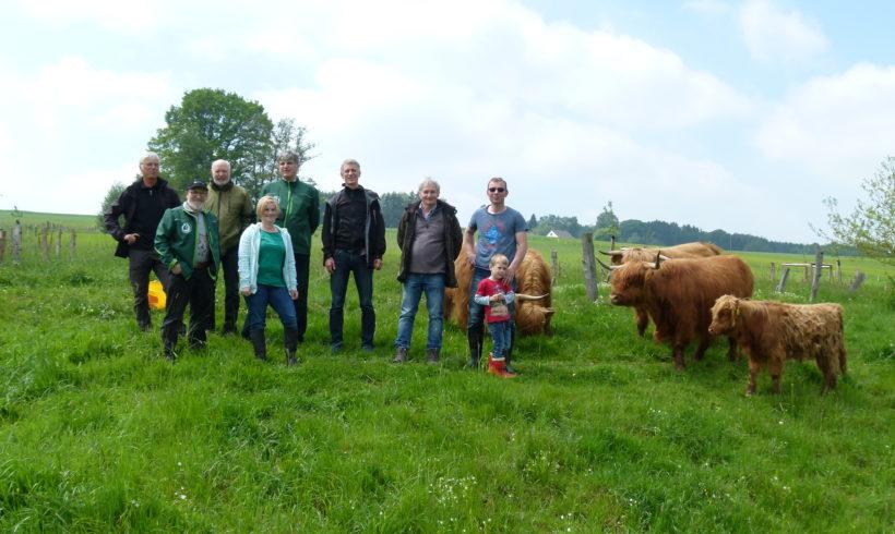 Schottische Hochlandrinder grasen für den Naturschutz