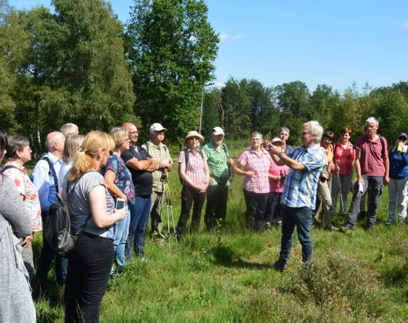 Wanderung Buchholzer  Moor: Wo Glocken- und Besenheide blühen