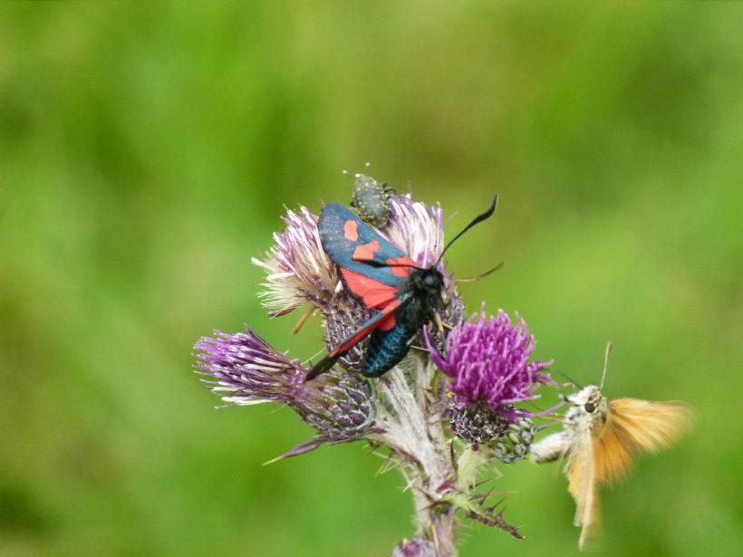 Insektenschwund – Ursachen und Handlungsmöglichkeiten