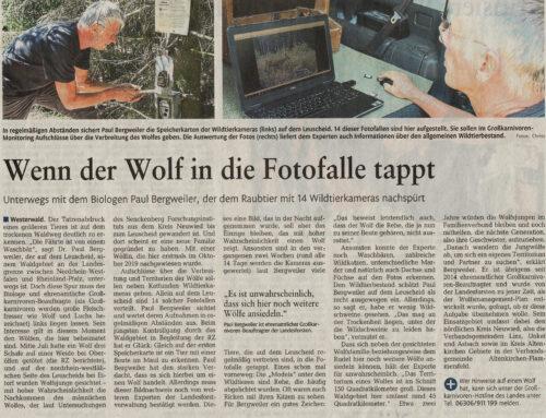 Rhein-Zeitung 10.8.2020 – Wenn der Wolf in die Fotofalle tappt