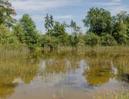 Buchholzer Moor